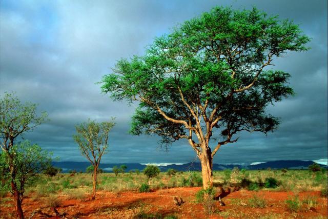En todo paseo por la Naturaleza, una recibe más que busca.... Buenos días! 🌳😘🌳😘🌳