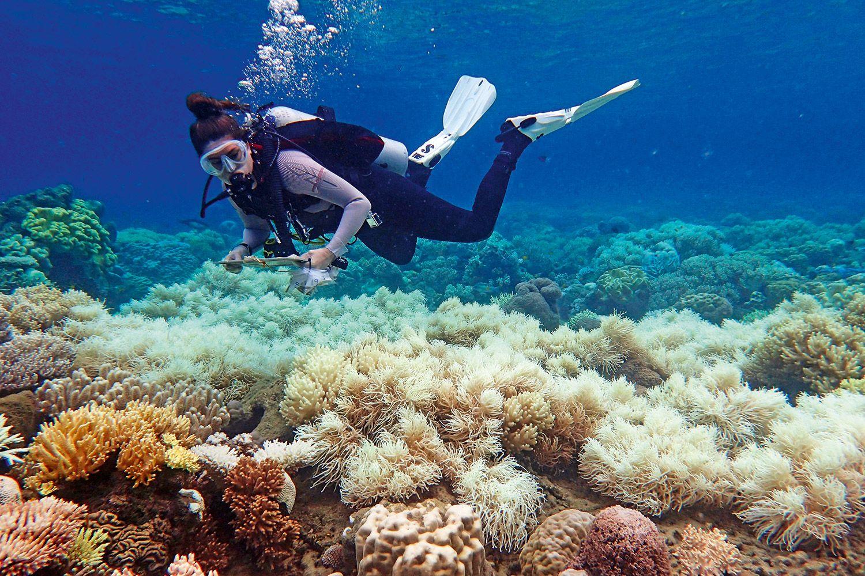 barreira-coral-australia-2017-903